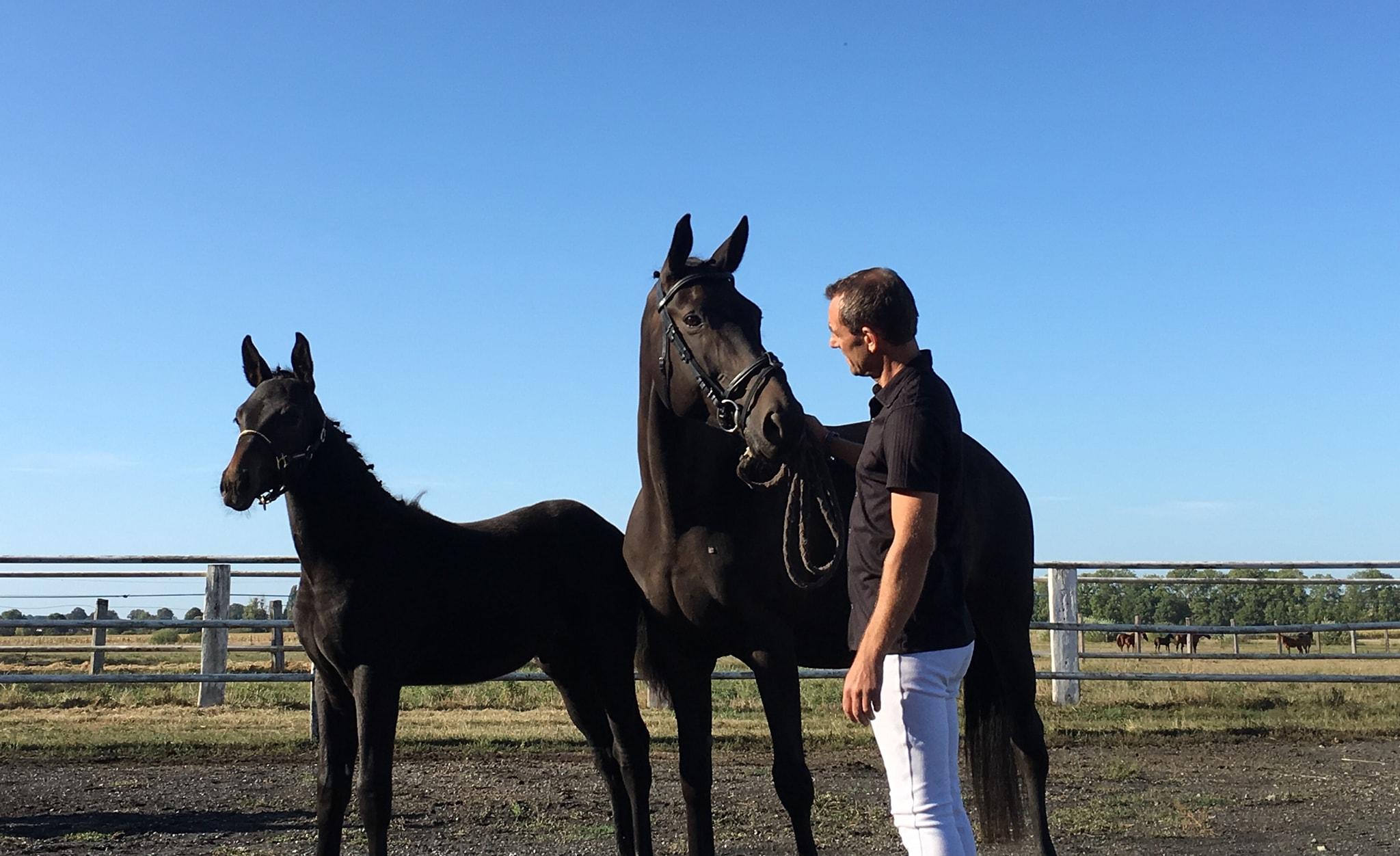 cedrick concours foal.jpg