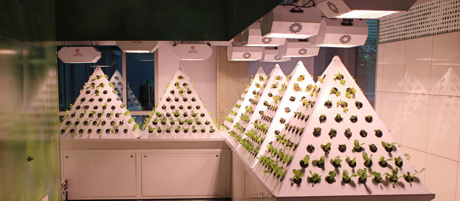 Urban Agriculture and Hydroponics 101