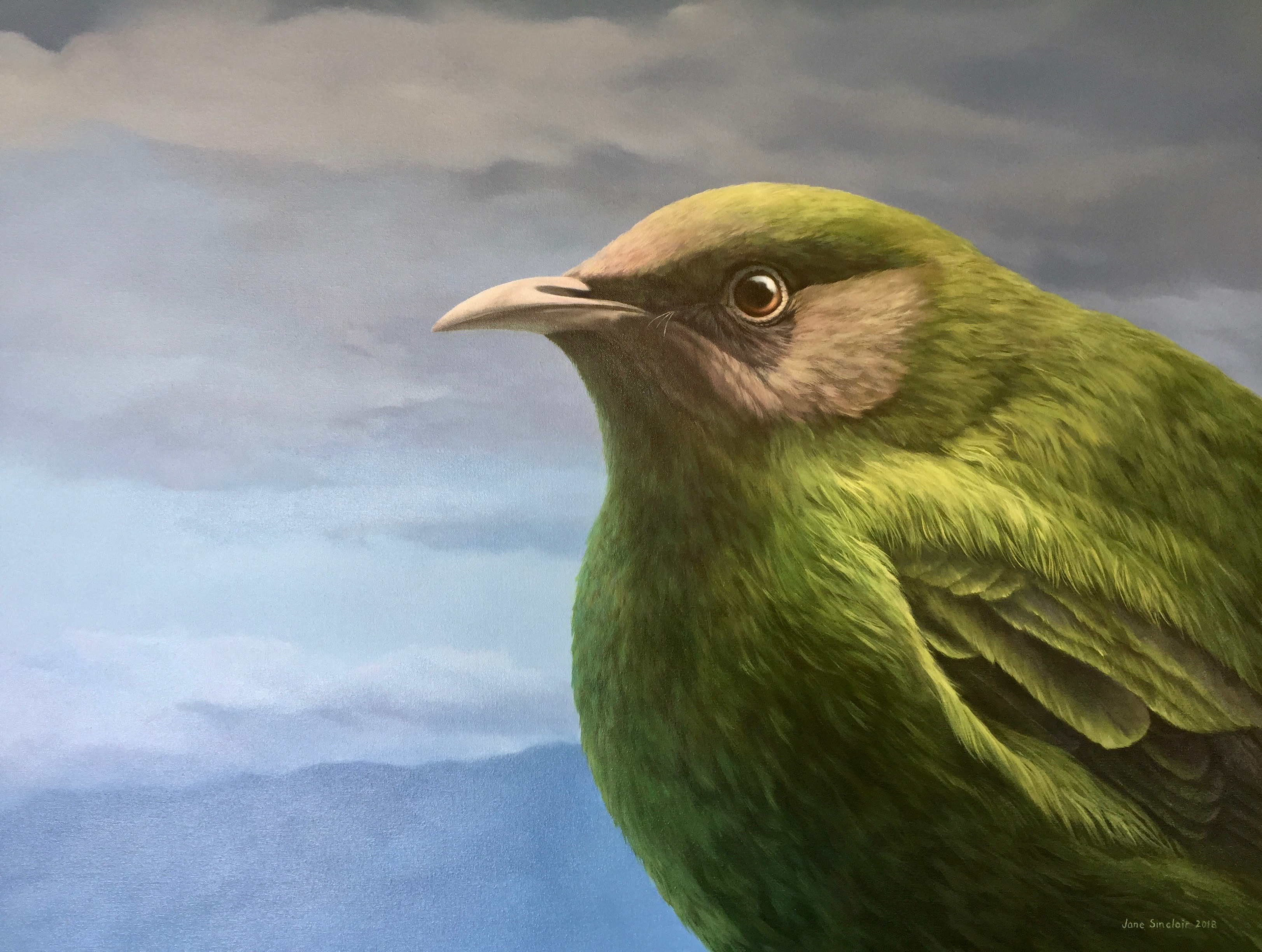 Young Korimako Bellbird