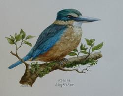 Kotare NZ Kingfisher