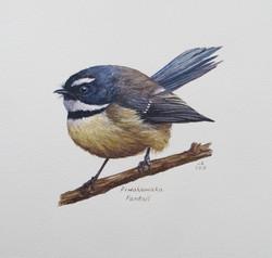 Piwakawaka Fantail