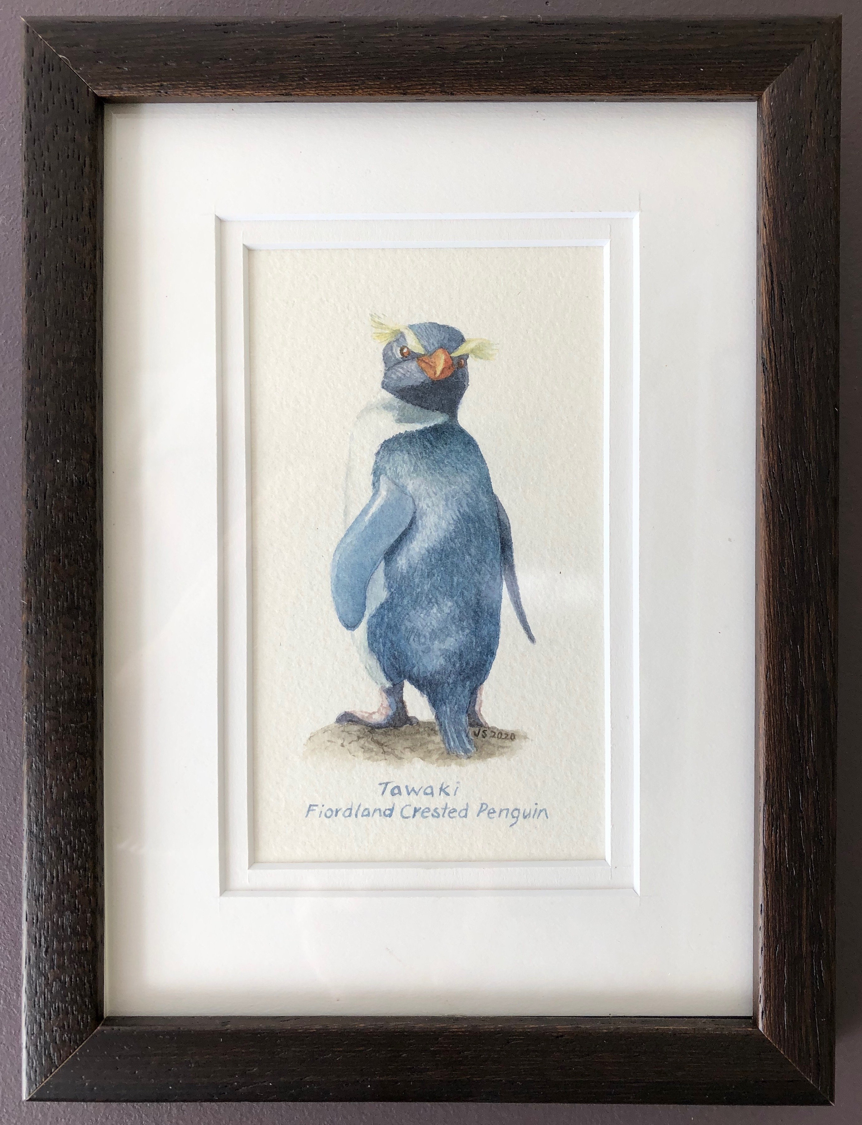 Tawaki Fiordland Crested Penguin
