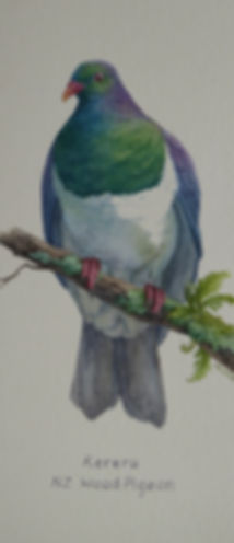 Painting of a Kereru