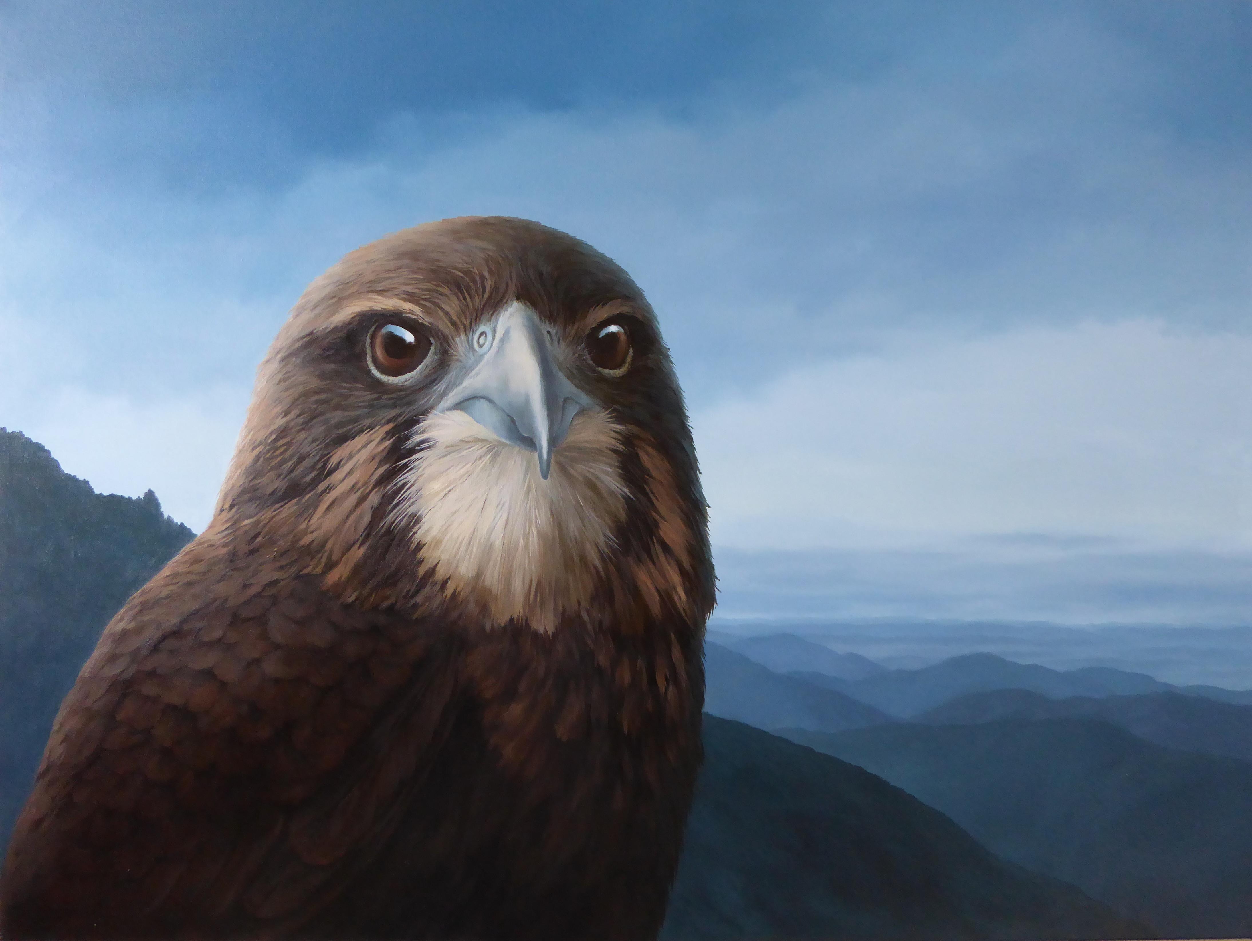 Tararua Karearea NZ Falcon