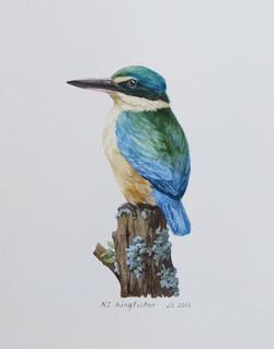 Kotare - NZ Kingfisher