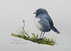Toutouwai - South Island Robin
