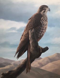 Karerea NZ Falcon