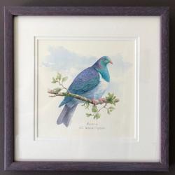 Kereru NZ Wood Pigeon