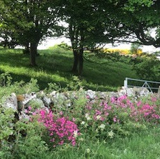 Flowers in Mordington