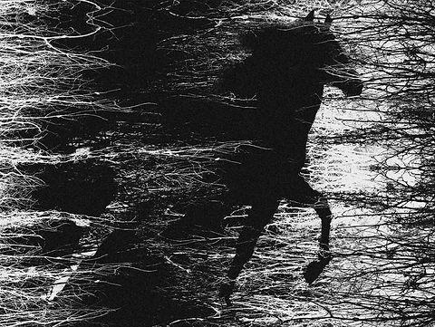 cavalos02.jpg