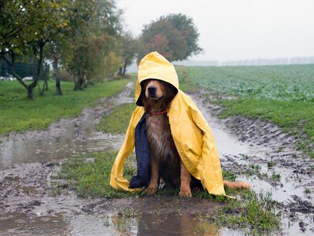 Hurricane Pet Preparedness