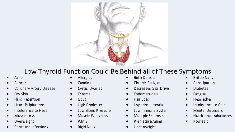 Minnetonka Chiropractor, Affinity Chiropractic offers thyroid support.