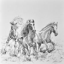 Cavalli in corsa_21x29,7cm_2015.jpg