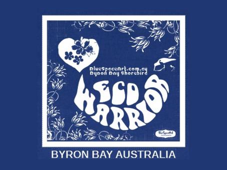Protecting Byron Bay Shorebirds