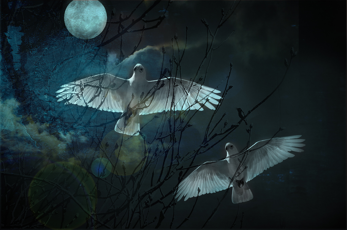 Corellas in Super Moonlight