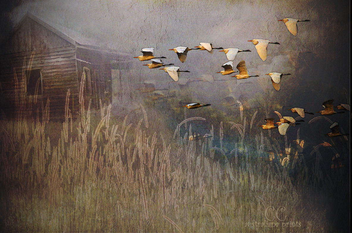 Flight of the Egrets