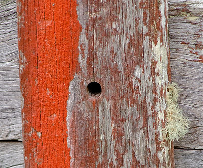 Rustic weathered wood and lichen