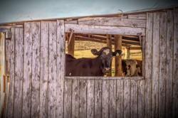 Felton Dairy Farm
