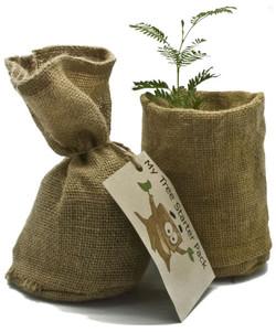 My Tree Starter Packs (Bag)