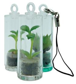 Baby Pet Plant