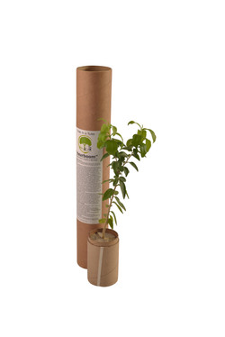 Tree In A Tube