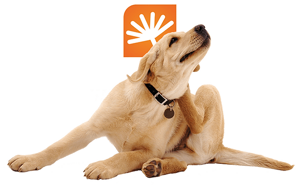 Sintomas da atopia canina