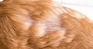 Queda de pêlos de causa alérgica