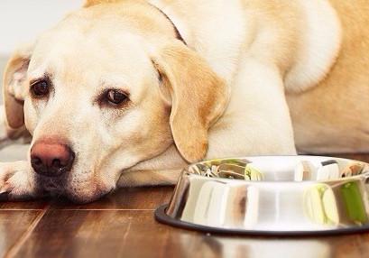 Alergia Alimentar no cão e no gato