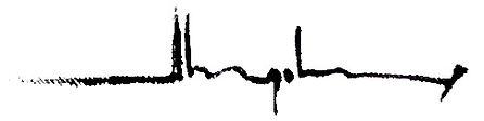 Logo-Signature-2.jpg