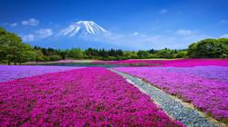 1038556_kyoto-japan-sakura-wallpapers-hd