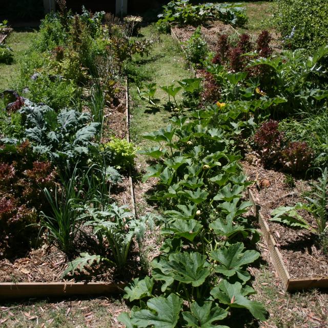 Compainion planting