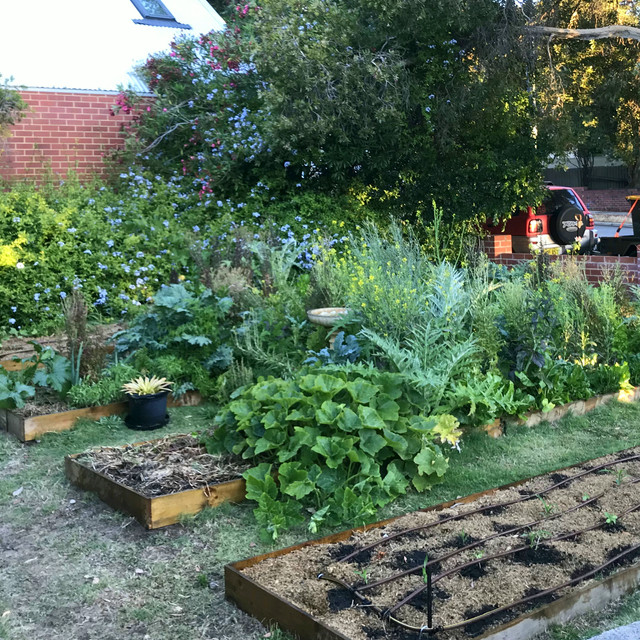 From a lawn front to a edible front