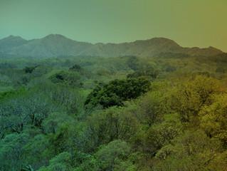 Selvas secas