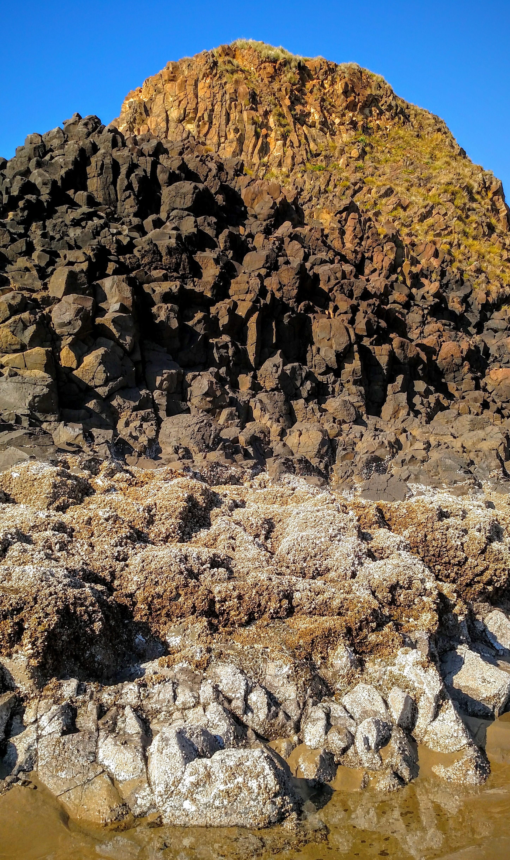 Barnacles and Basalt