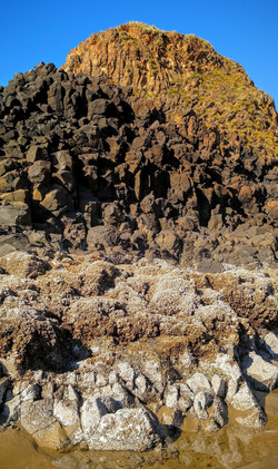 Barnacles and Basalt