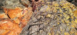 Rocks and Lichen at Cape Falcon