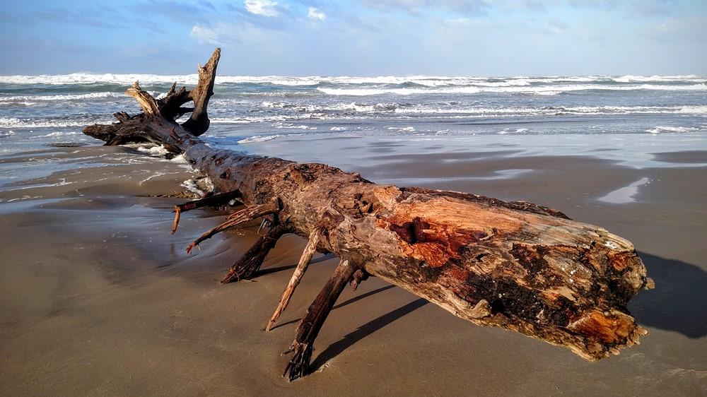 Storm-tossed Tree