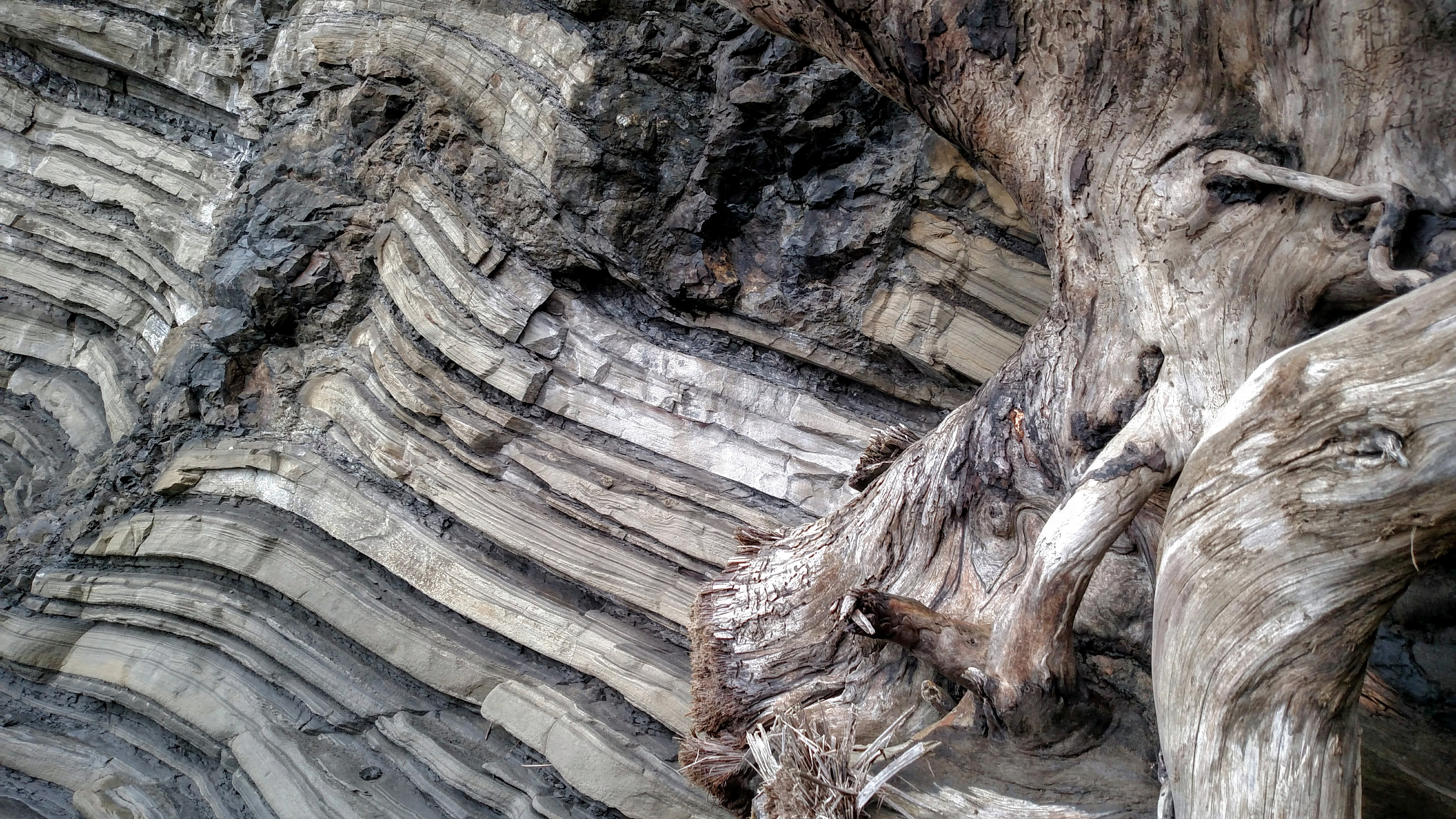 Driftwood and Sea Cliff
