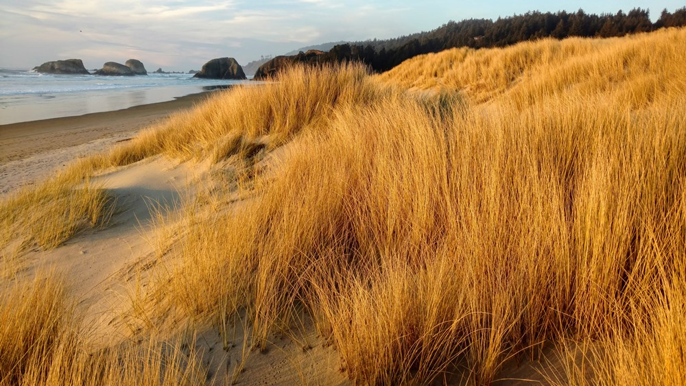 Beachgrass at Chapman Beach
