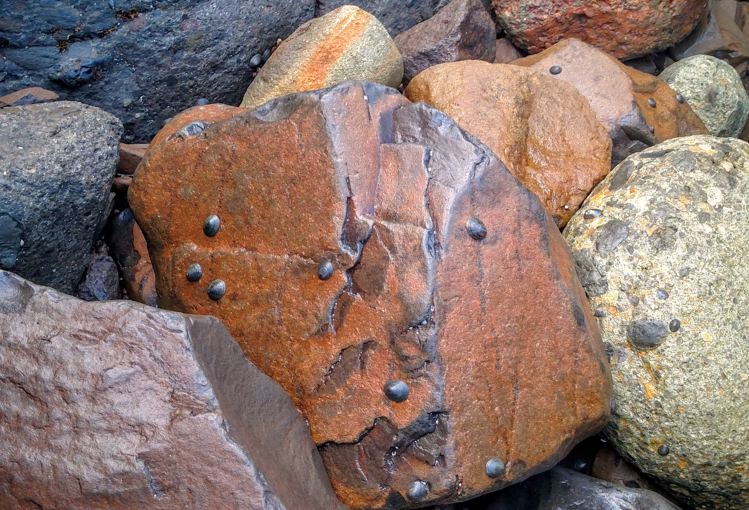 Boulders with Limpets