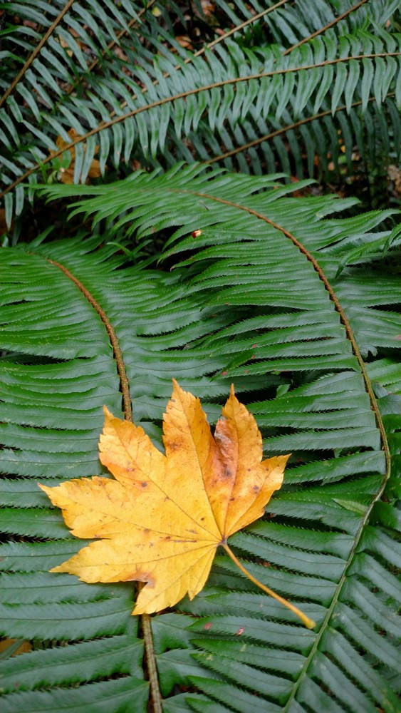 Autumn in the Rainforest