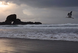Seagull in Storm at Ecola