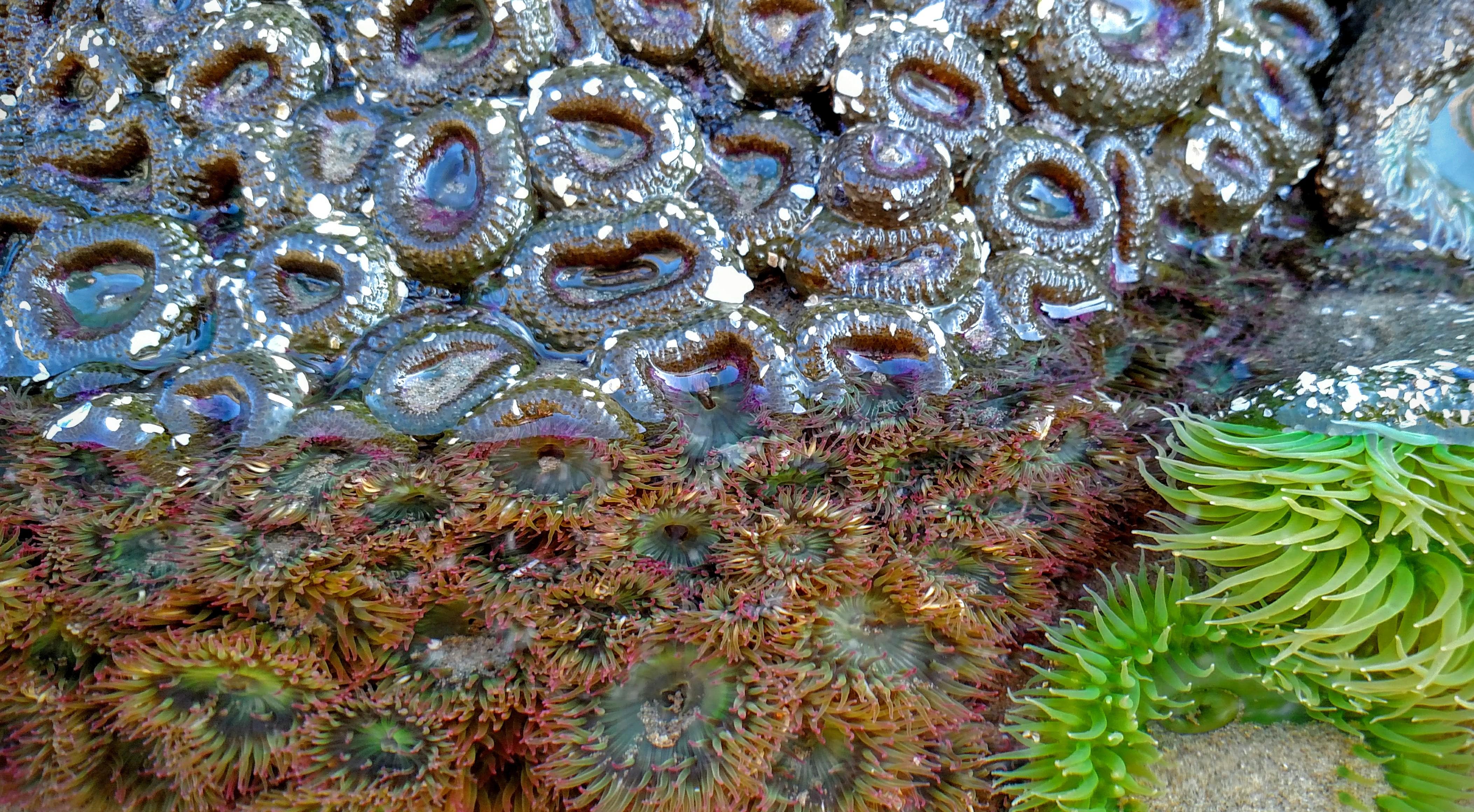 Anemones Above and Below Waterline