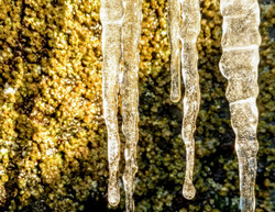 Icicles in Barnacle-covered Tidepool