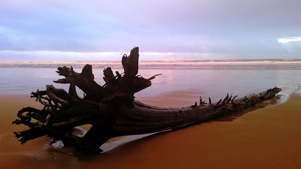 Drift Log in Stormy Sunset