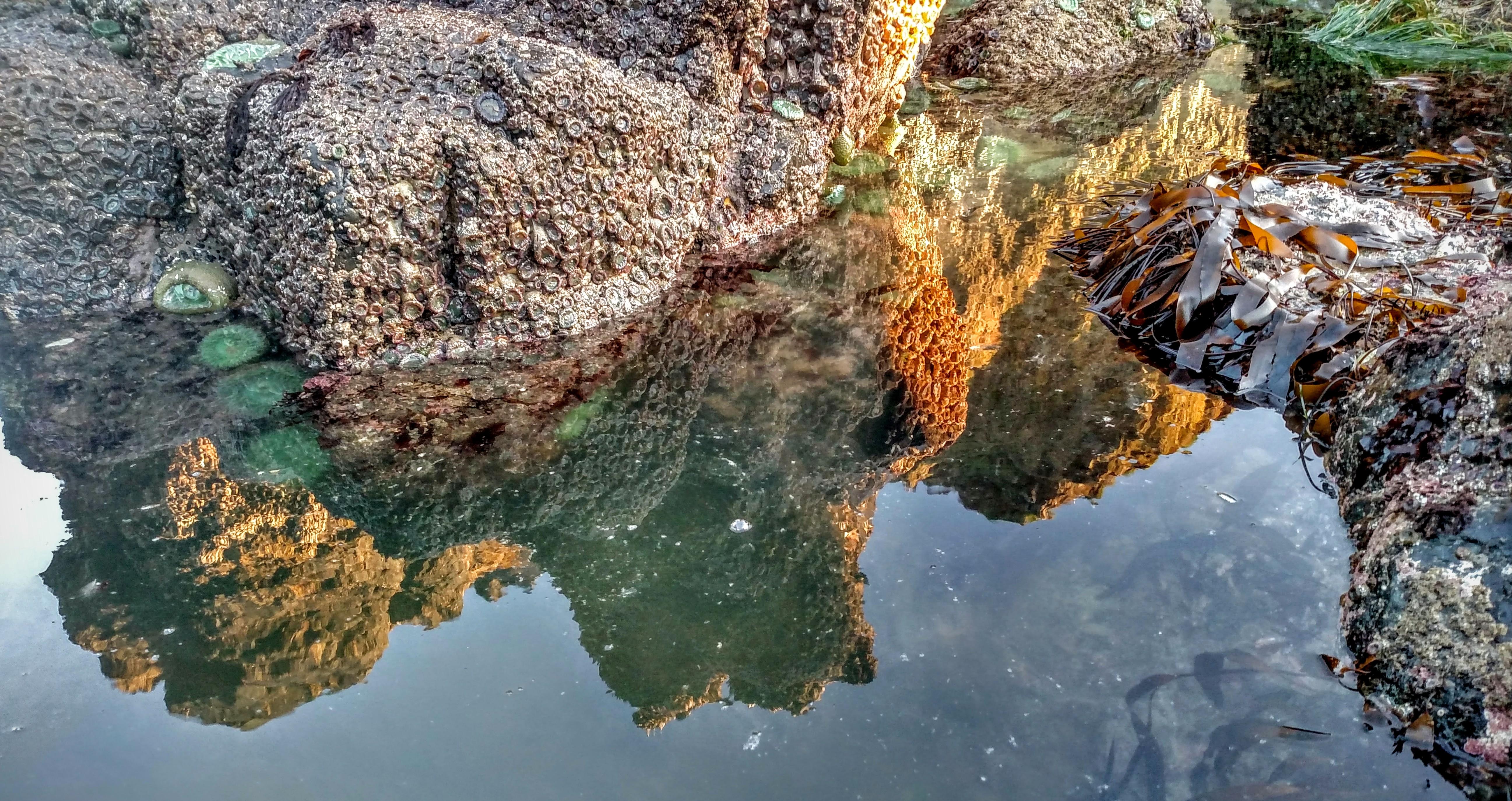 Tidepool Reflection