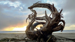 Mythic Serpent Made of Driftwood