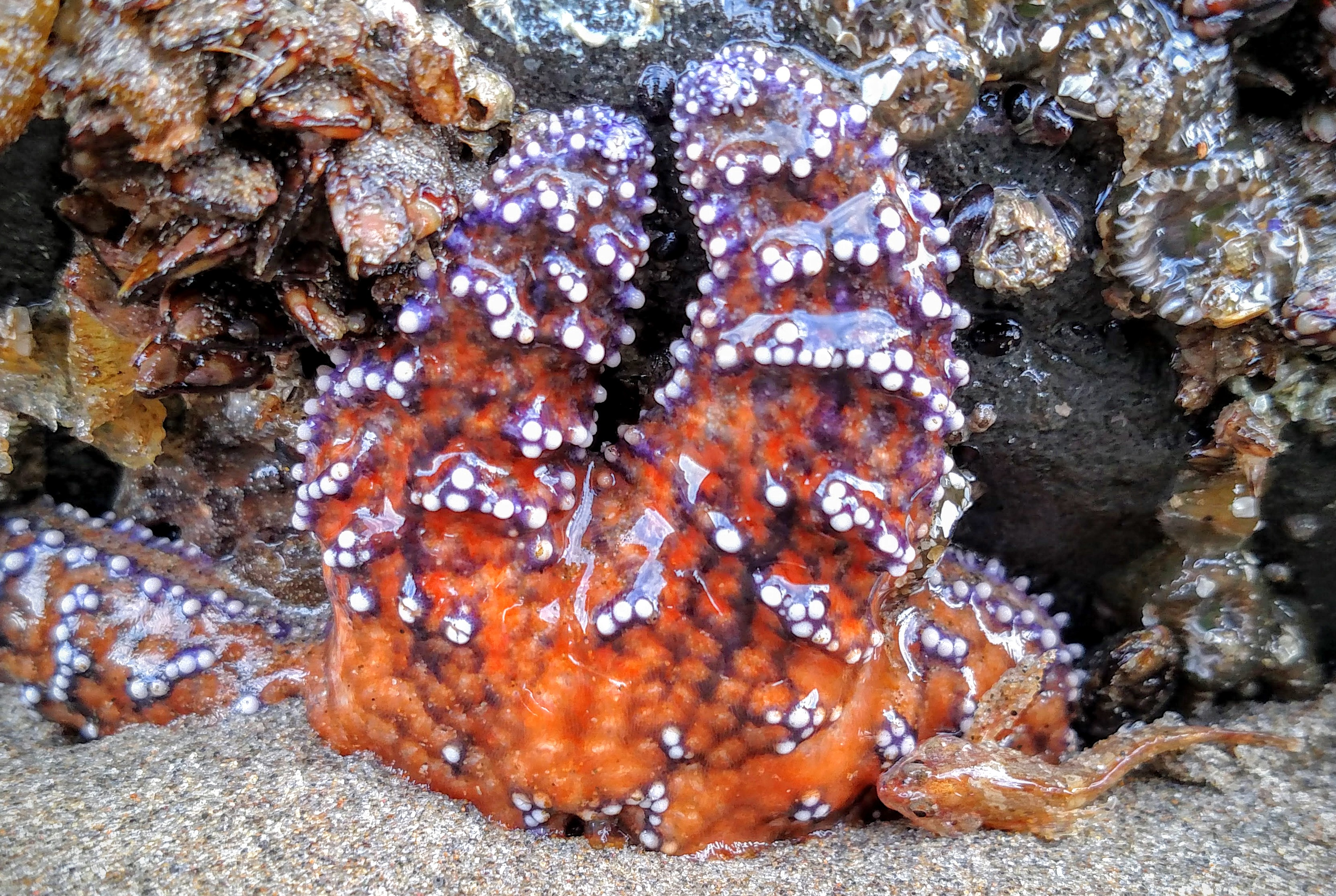 Stranded Starfish and Sculpin