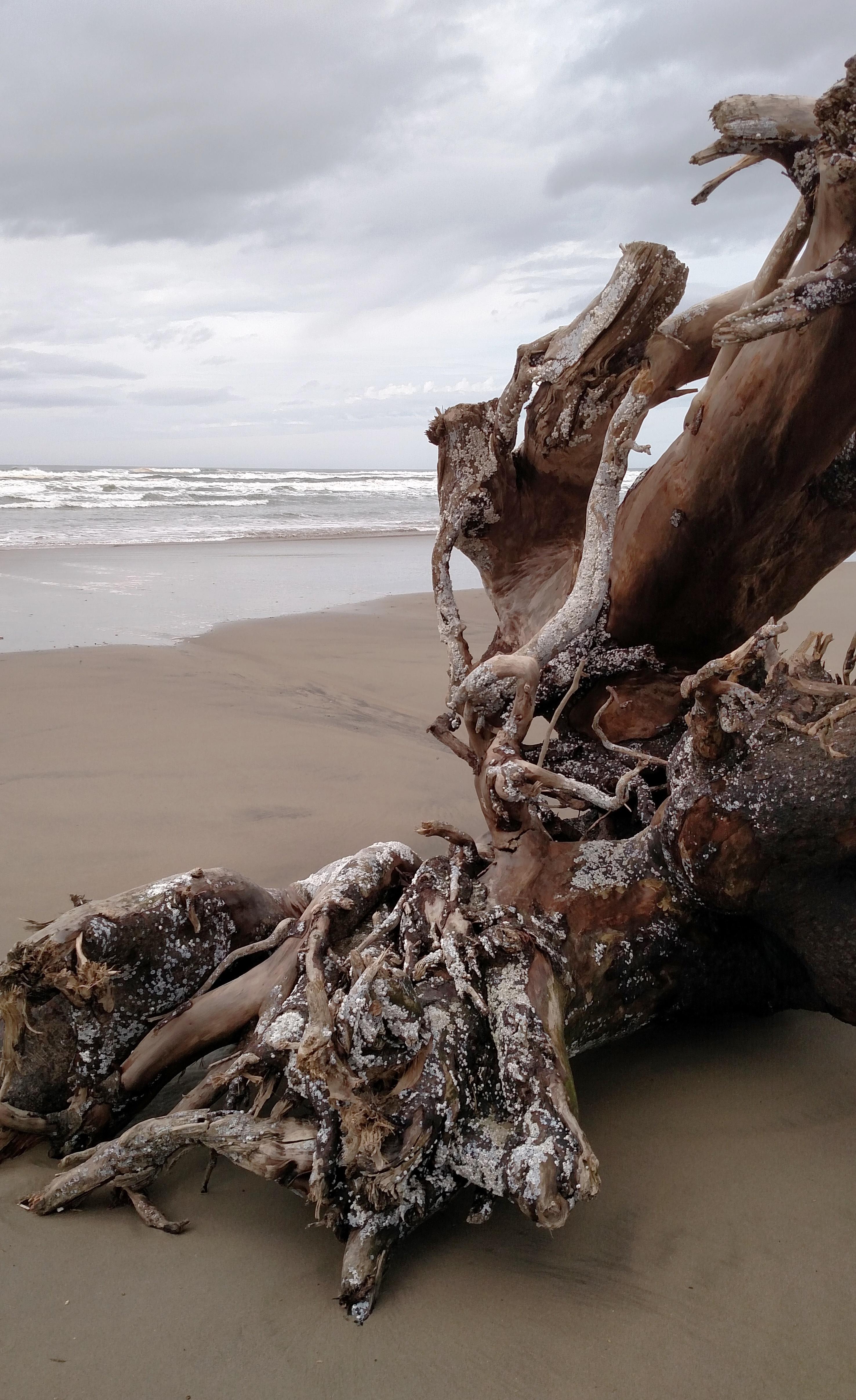 Neahkahnie Beach