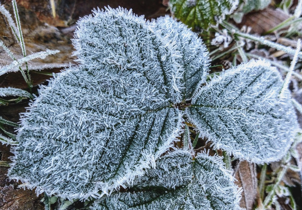 Frost in the Rainforest